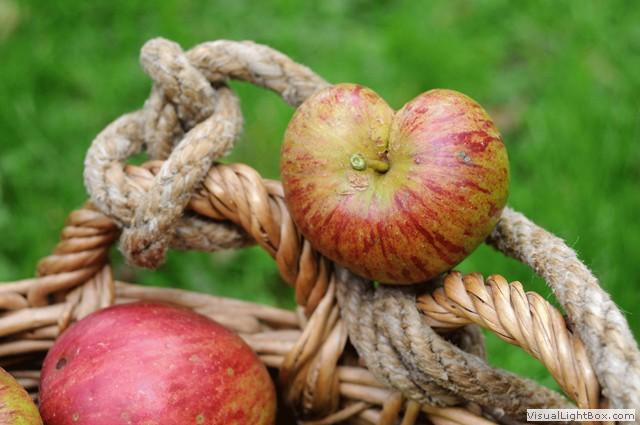 Apfelernte – Ferien auf dem Trenklehof